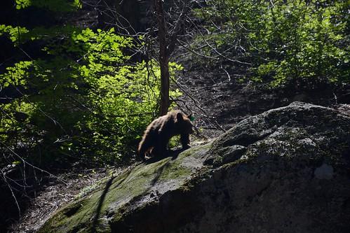 Green Ear Tag Bear