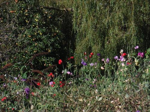 Garden Detail, Tisbury Mill (II)