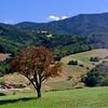 Pre-autumnal colours