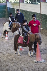 western riding(0.0), eventing(0.0), mare(0.0), stallion(0.0), animal training(0.0), jockey(0.0), animal sports(1.0), equestrianism(1.0), english riding(1.0), equestrian sport(1.0), sports(1.0), horse(1.0), pony(1.0),