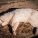 Cats of Ephesus by Tuanox