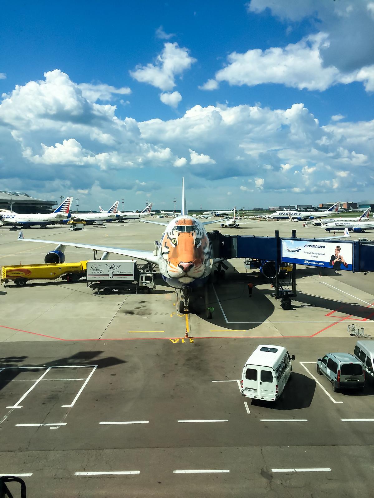 На перроне стоит 747 трансеэро, разукрашенный под Амурского тигра. Самолет был