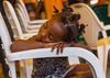 Benin, West Africa, Porto-Novo, little girl sleeping on a chair arm by Eric Lafforgue