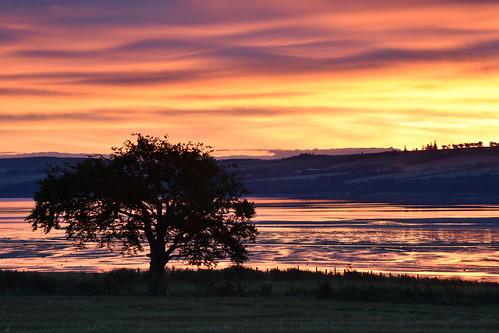 pink sunset sea sky cloud black tree water beauty silhouette clouds sunrise landscape dawn bay coast scotland seaside highlands outdoor dusk shore serene isle beech blackisle scottishhighlands kirkmichael udalebay