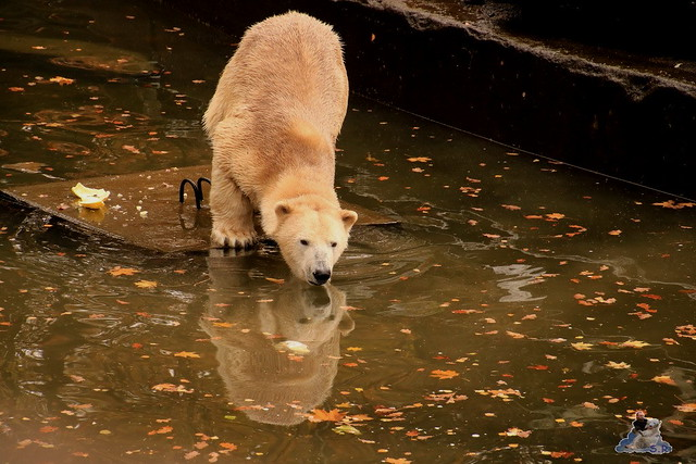 Tierpark Berlin 07.11.2015  093