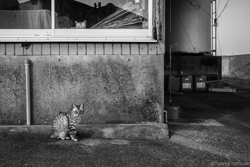 Monochrome Stray Cat #025