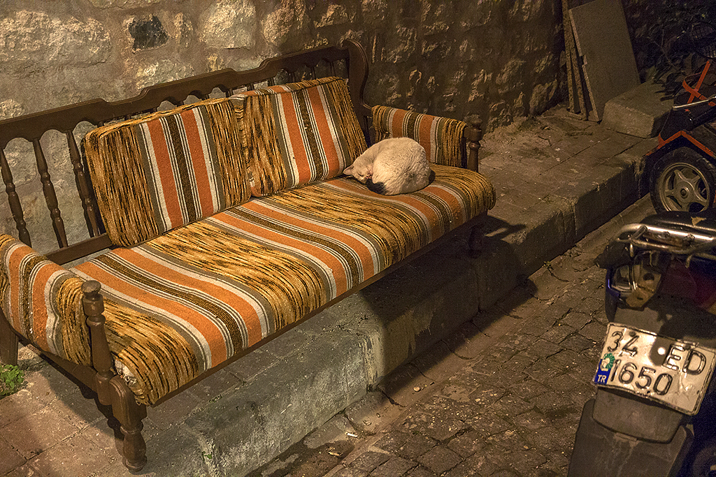 Cat on couch outside at 39 degree--Istanbul
