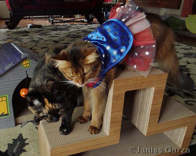 SummerBingaCopycat