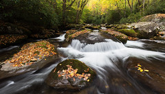 Big Creek - Great Smoky Mountains NP, North Carolina
