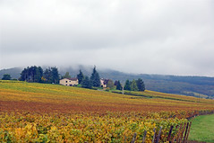 2016-10-24 10-30 Burgund 168 Collongette - Photo of Boz