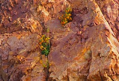 Coyote Hills 20140310