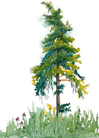 20150825_scrawny_pine_web