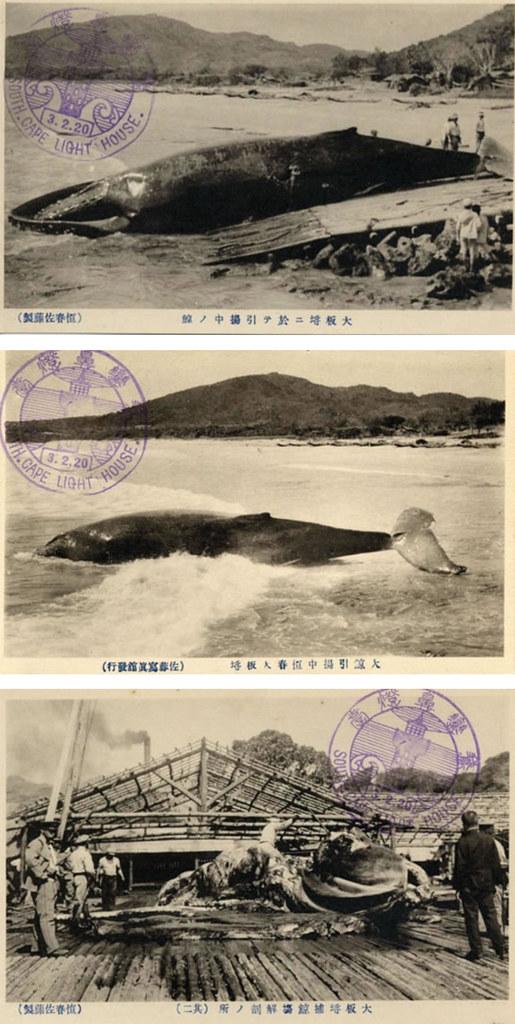 在大坂埒捕鯨的狀況。圖片來源:國家圖書館台灣記憶資料庫。