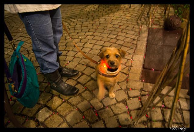 Perrito con luces en Oberammergau