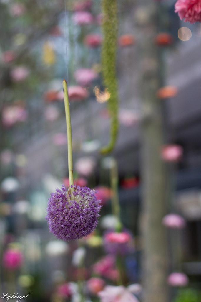 flower show-1.jpg