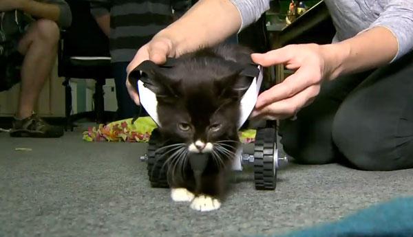 kitten-wheelchair-3d-printer