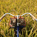 Rice Bike by johnrinker