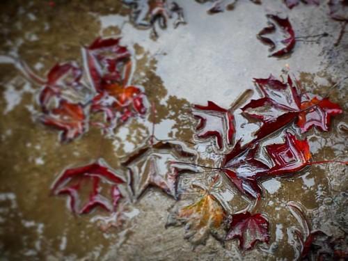 'Autumn' - #Brussels #Belgium #petit-sablon #photography #autumn #leaves #rain #mud