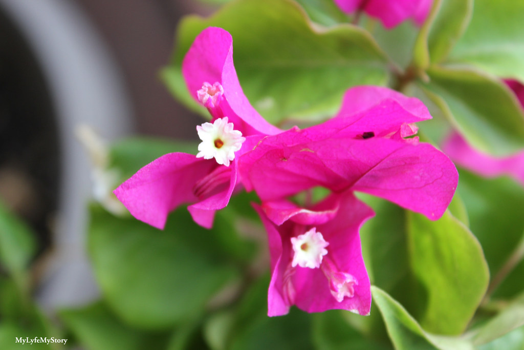 My Garden 2015 (5)