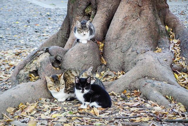 Today's Cat@2015-10-30
