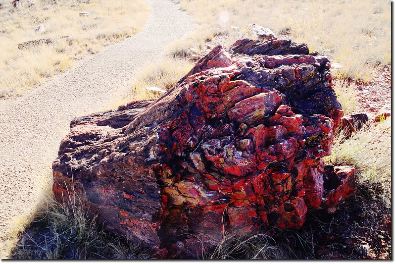 Agate House  Trail, Petrified Forest National Park 2