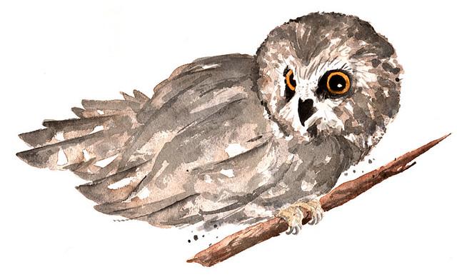 Belt - Owls
