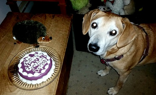 Hound and her dog Birthday Cake by The Barkery - Lapdog Creations