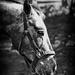 B&W Horse.jpg