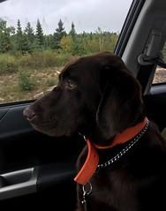 My travelling partner