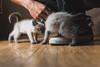 Siamese Kittens Griffens Feet 2