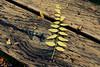 broken symmetry by bluechameleon