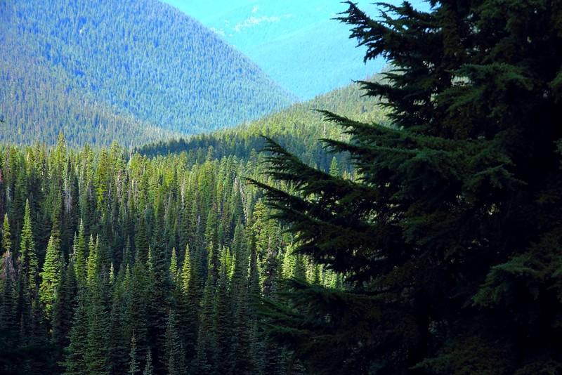 IMG_6361 Palisades Lakes Trail