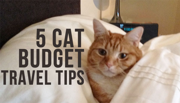 5-cat-budget-travel-tips