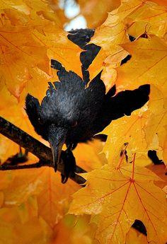 bird autumn (2)