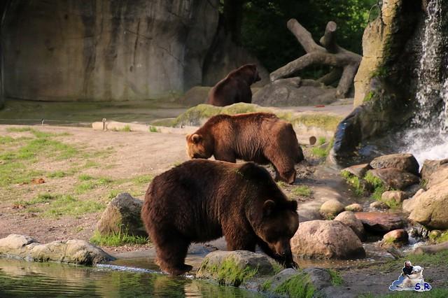 Tierpark Hagenbeck 27.09.2015 0109