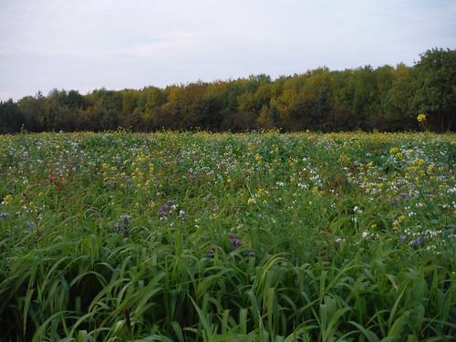 Flowery Field, Barton-le-Clay