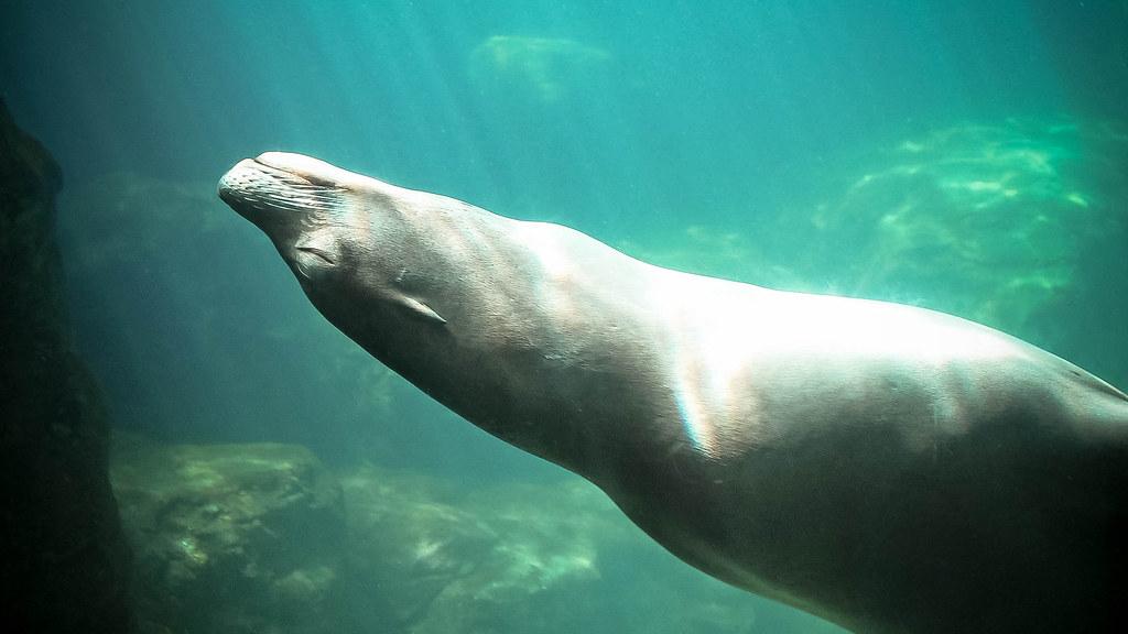 Serene Sea Lion
