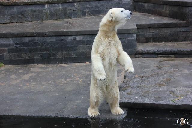 Besuch Zoo Rostock 17.10.2015116