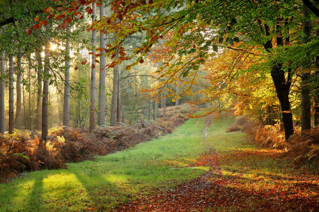 Autumn Forest Glade