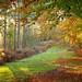 Autumn Forest Glade by Alan MacKenzie