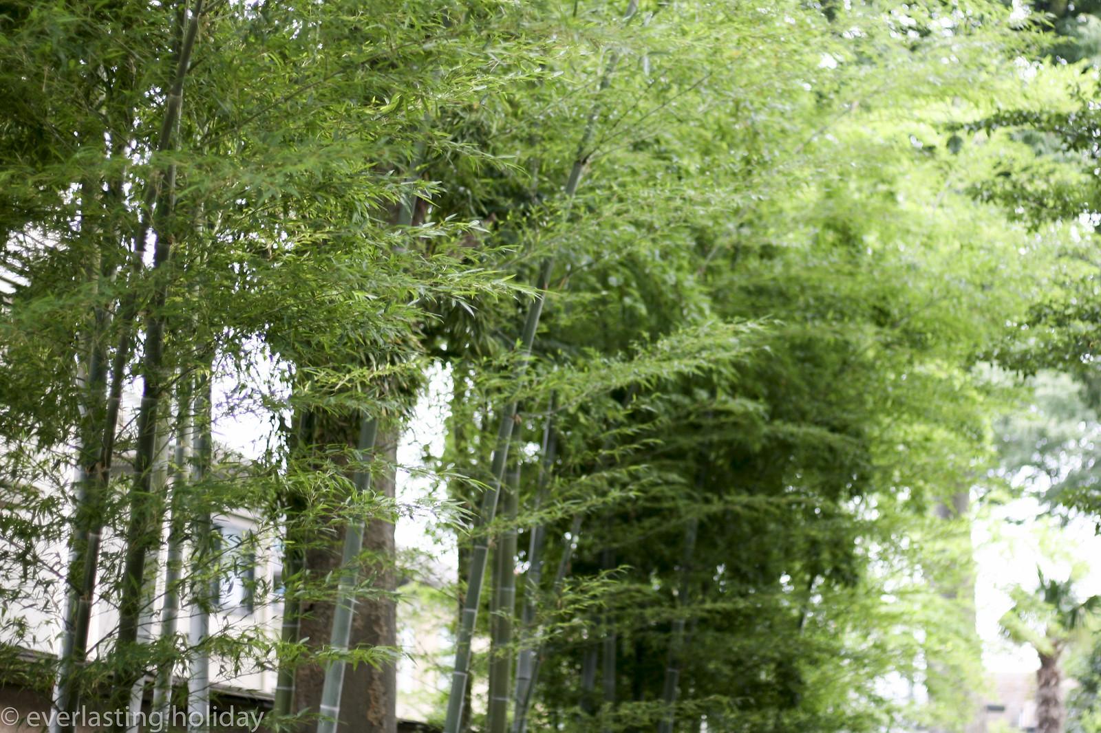 竹林 a bamboo forest