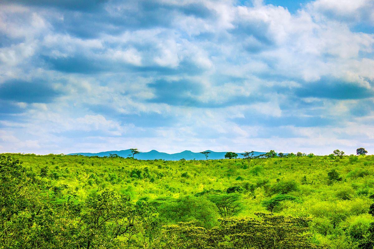 Ngong Hills, Kenya. Credit: Siegmund Kamau.