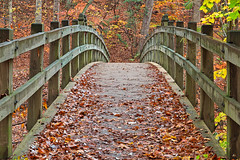Bridge to Fall - Rock Creek Park