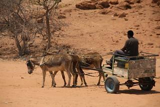 Our driver Mugo commandeering a random donkey.