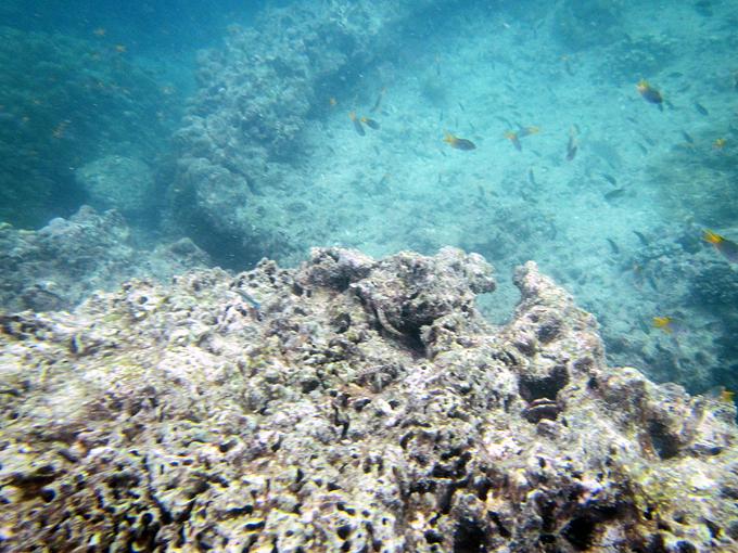 snorkeling18