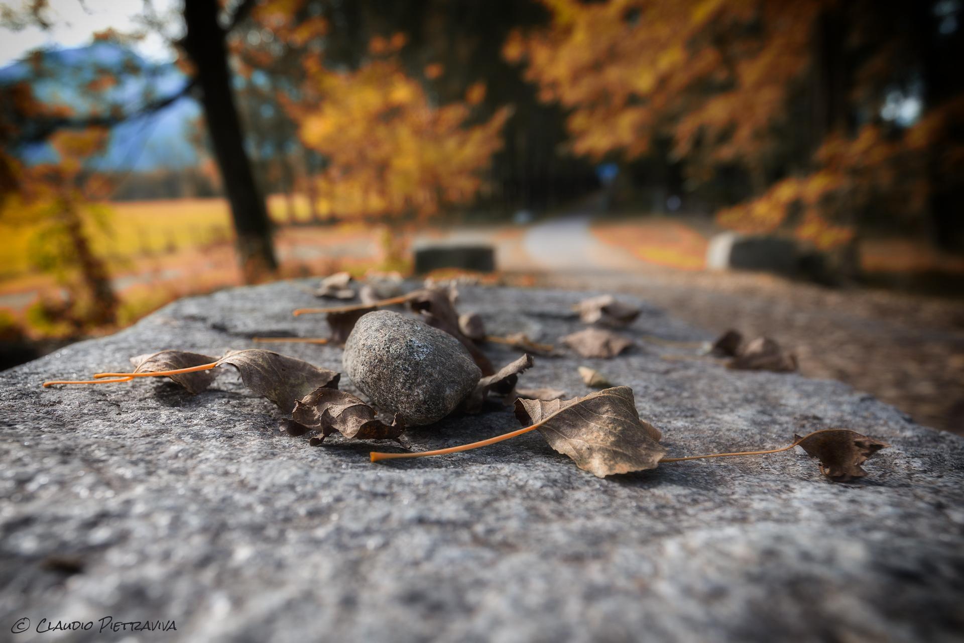 Progetto - Urban Autumn