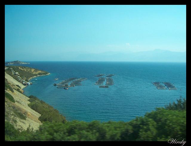 Grecia Olimpia Delfos - Piscifactoría