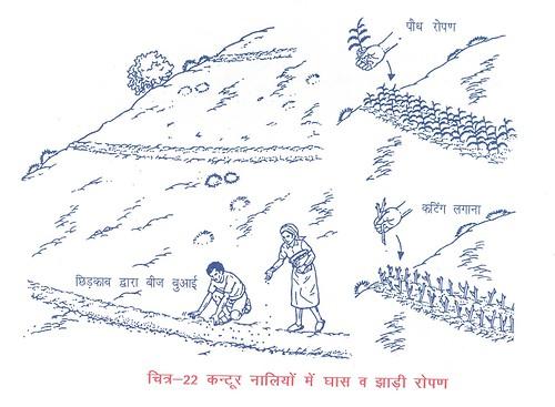 कन्टूर नालियों में घास व झाड़ी रोपण