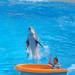 Dolphin & Girl