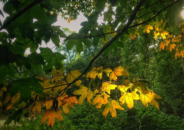 Waiting for the fall............. Castleroe Wood.